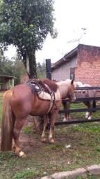 Égua tostada ruana