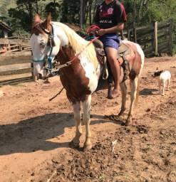 Paint horse, vendo ou troco, pego gado chama