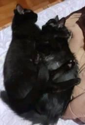 Gatos pretos doação