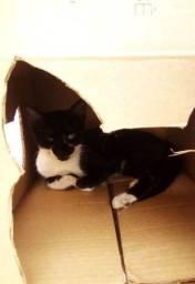 Doando gatinho encontrado embaixo da casa