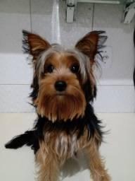 À procura do meu primeiro amor cachorro ?