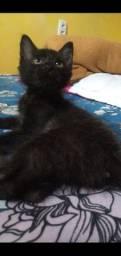 Gatinho preto (doação)