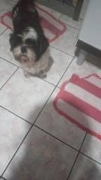 Cachorro macho