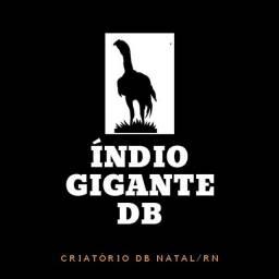 Indio Gigante DB-Natal|RN