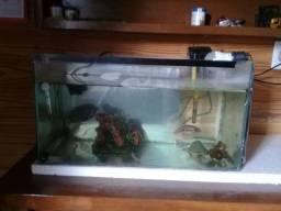 Troco aquario por caixa d'água