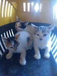 Doa se lindos gatinhos!!!!!!