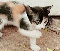 Doação de 2 filhotes de gatinhas super mansas!!!