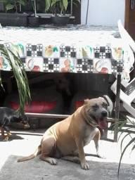 Doação cadela adulta porte médio urgente