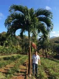 Palmeira ÁRVORES NATIVAS REFLORESTAMENTO