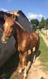 Vendo cavalo crioulo puro