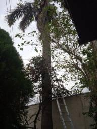 Faço jardinagem e poda de árvore e coqueiro.