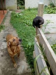 Doação cão e gato