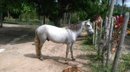 Vende-se esse lindo cavalo ! valor