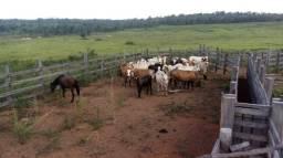 Fazenda vecinal 11 de Iracema-RR