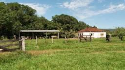 (Fazenda com 297ha em Mato Grosso) no município de Alto Paraguai(MT-409 KM35)