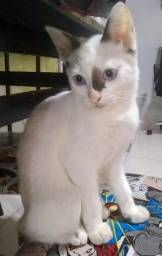 Adoção gato