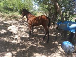 Cavalos,  éguas e potros.