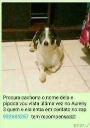Cachorra perdida