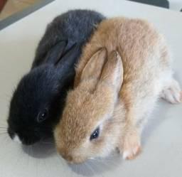 Filhotes de coelhos - lindos