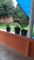 Vende ou troco por casa em Manaus