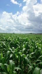 Parceria em Agro negócio