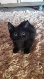 Linda gatinha para adoção responsável!