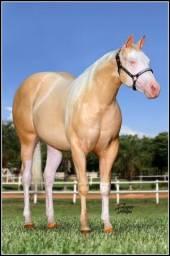 Rancho DG - Venda permanente de cavalos QM
