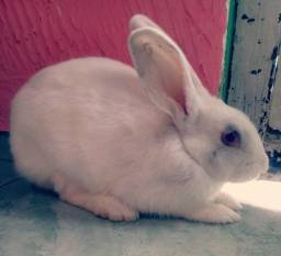 Vendo casal de coelhos