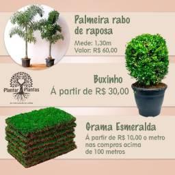 Promoção Plantas( Plantar Plantas)