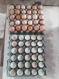 Vendo ovos galados GLZ e Emprapa 51