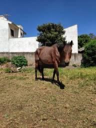 Égua Rosilha