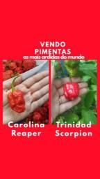 Vendo Pimentas