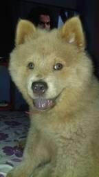 Cachorra who who fêmea