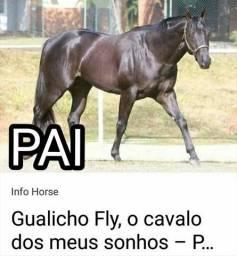 Puma Fly