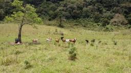 Vendo fazenda em Macaé - 72 Alqueire