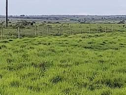 Arrendamento no Xingu