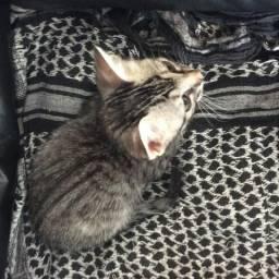 Urgente!!! Doação de dois gatos filhotes para adoção