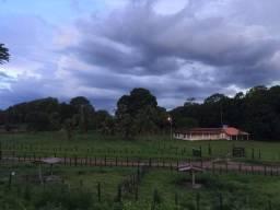Bela fazenda com 450 hectares, super estruturada em Itapecuru -Mirim!