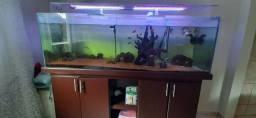 Aquario 560 litros
