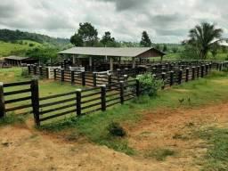#Fazenda a 40 km de castanhal