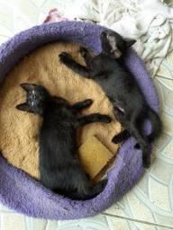 Doações de gatos macho e fêmea