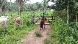 Fazenda em Colinas (miradouro) - Maranhão