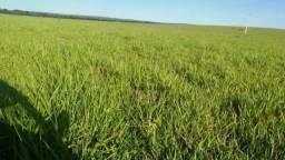 Fazenda pecuária em Tesouro Mato Grosso