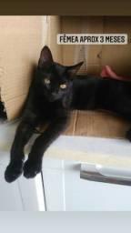 ADOTE/RJ!!! Gatos pretos não dão azar, dão amor