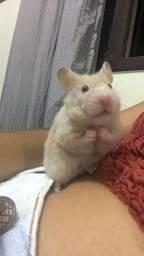 Vendo dois hamsters com gaiola, ração e granulado de madeira