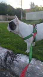 Cobertura Bulldog francês