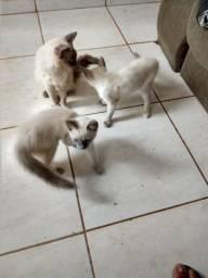 Gatinhos (Doa-se 1 casal)!