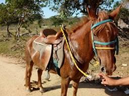 Cavalo top