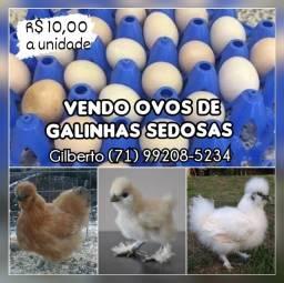 Ovos de Galinhas Sedosas