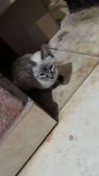 To doando gatinhos